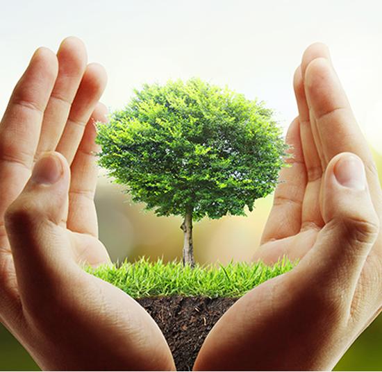 Trepleie-en hånd som beskytter et tre