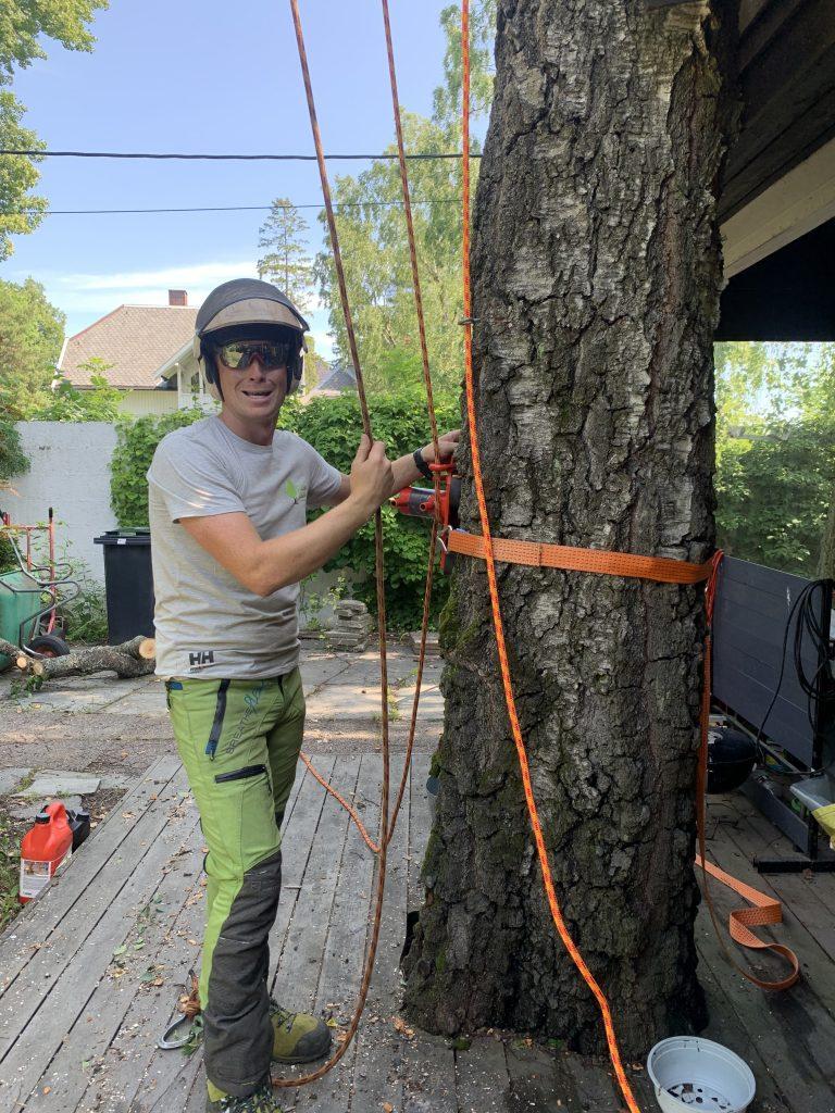 Person fra stubbeteknikk som sikrer treet