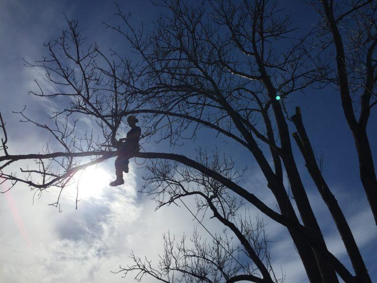 Trefeller på en gren med blå himmel i bakgrunnen